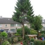 Boom verwijderen door middel van een boomklimmer