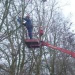 Bomen snoeien met hoogwerker
