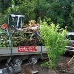 Groenafvoer bomen en takken verwijderen