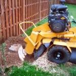 Stobben frezen, boomstronk verwijderen